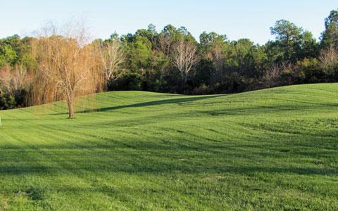 landscape-maintenance