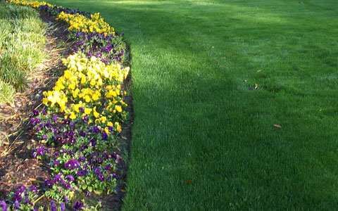 turf-and-weed-control