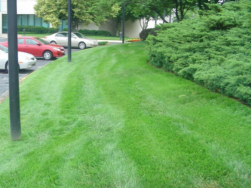 williamsburg-hill-side-design-pics-005