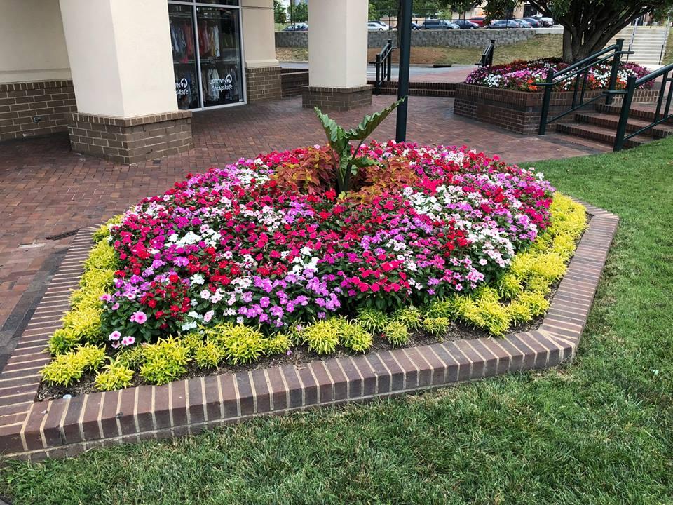 Phoenix Landscape Management: Spring Flower Portfolio 2018