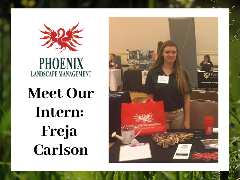 Meet Our Intern: Freja Carlson